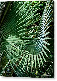 20120915-dsc09902 Acrylic Print by Christopher Holmes