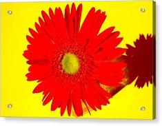 2024a2-001 Acrylic Print by Kimberlie Gerner