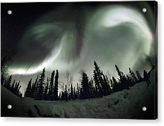 Aurora Borealis Acrylic Print by Chris Madeley