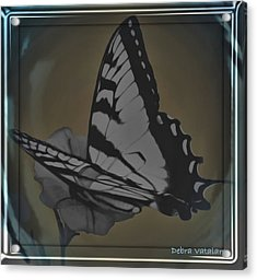 Butterfly Collection Acrylic Print by Debra     Vatalaro