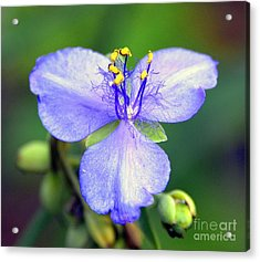 Flowers Of The Forest Series  Acrylic Print by Terry Troupe