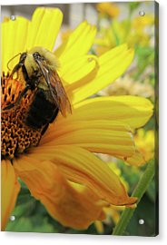 Bee Acrylic Print by Michele Caporaso