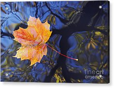 Autumn Leaf On The Water Acrylic Print by Michal Boubin