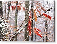 Autumn Snow Monongahela National Forest Acrylic Print by Thomas R Fletcher