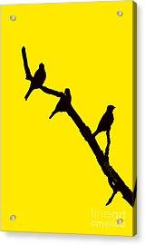 3 Birds On A Limb Acrylic Print