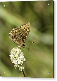 Acrylic Print featuring the photograph Butterfly by Betty Depee