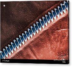 Cricket Sound Comb, Sem Acrylic Print by Ted Kinsman