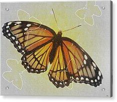 Designer Butterfly Collection Acrylic Print by Debra     Vatalaro
