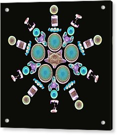 Diatom Assortment, Sems Acrylic Print by Steve Gschmeissner