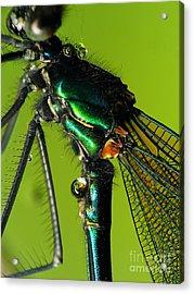 Dragonfly In Drops Acrylic Print by Odon Czintos