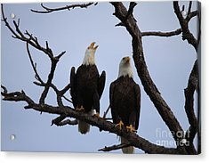 Eagles Acrylic Print by Jeanne Andrews