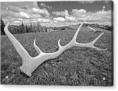 Elk Acrylic Print by Elijah Weber