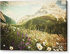 Field Of Daisies And Wild Flowers Acrylic Print