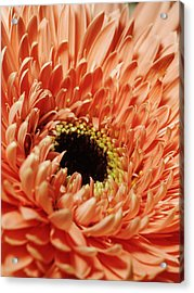 Flower Close Up Acrylic Print by Ignaz Uri