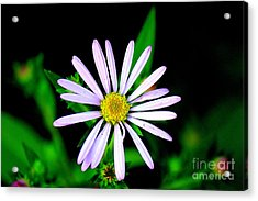 Gardens Of The Soul Acrylic Print by Allen Sindlinger