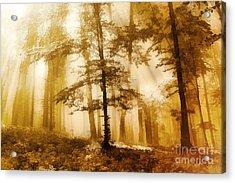 Golden Forest  Acrylic Print by Odon Czintos