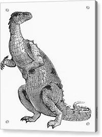 Iguanodon, Mesozoic Dinosaur Acrylic Print by Science Source