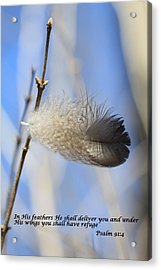 In His Feathers Acrylic Print by Rick Rauzi