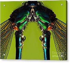 Insect Acrylic Print by Odon Czintos