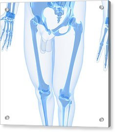 Leg Bones, Artwork Acrylic Print by Sciepro