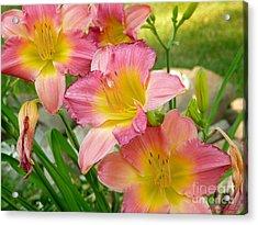 3 Lillies Acrylic Print