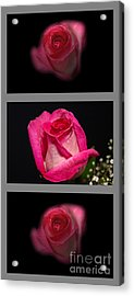 3 Little Roses Acrylic Print