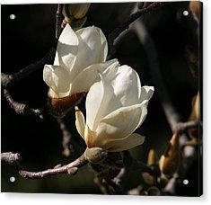 Magnolia World Of Beauty Acrylic Print by Valia Bradshaw