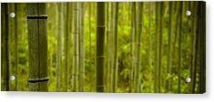 Mystical Bamboo Acrylic Print by Sebastian Musial