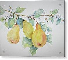 3 Pears Acrylic Print