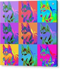 Pop Art Siberian Husky Acrylic Print by Renae Laughner