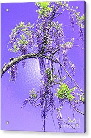 Acrylic Print featuring the photograph Purple Passion Wisteria by Holly Martinson