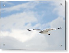 Seagull Acrylic Print by Mike Rivera