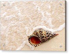 Seashell And Ocean Wave Acrylic Print