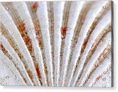 Seashell Surface Acrylic Print by Elena Elisseeva