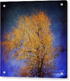 Textured Tree Acrylic Print