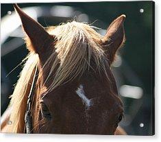 The Beauty Of The Horses Acrylic Print by Valia Bradshaw