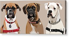 Three Boxers Acrylic Print by Kris Hackleman