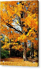 Acrylic Print featuring the photograph Tree Of Gold by Joe  Ng