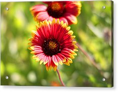 Acrylic Print featuring the photograph Wild Flower by Jeanne Andrews