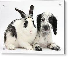 Puppy And Rabbit Acrylic Print by Mark Taylor