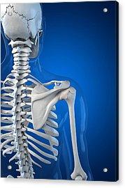 Upper Body Bones, Artwork Acrylic Print by Sciepro