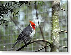 Bird Acrylic Print by Jeanne Andrews
