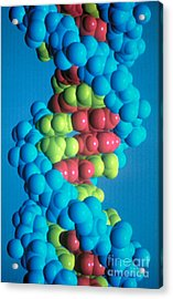 Dna Acrylic Print by Science Source