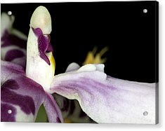Exotic Orchid Flower Acrylic Print by C Ribet