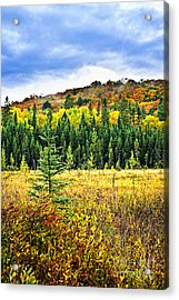 Fall Forest Acrylic Print by Elena Elisseeva