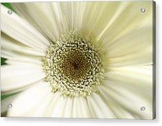 Flower Acrylic Print by Falko Follert