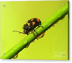 Insect Acrylic Print by Odon Czintos
