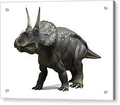 Nedoceratops Dinosaur, Artwork Acrylic Print by Sciepro