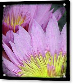 Photography Floral Art  Acrylic Print by Ricki Mountain
