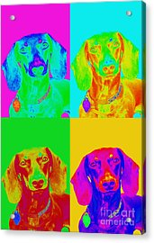 Pop Art Dachshund Acrylic Print by Renae Laughner